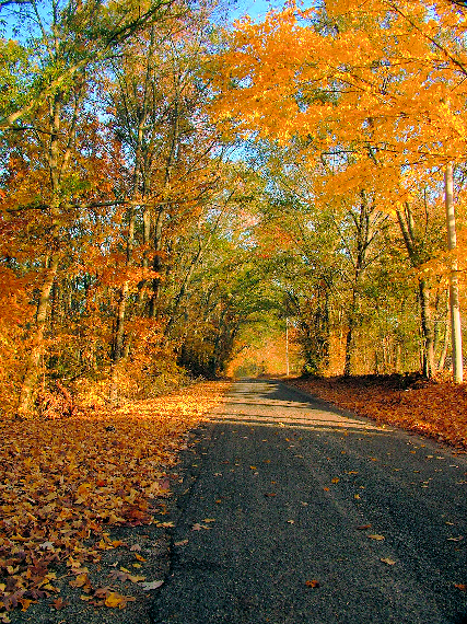 autumn-road.png